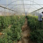 افتتاح طرح اشتغالزایی گلخانه در دهرم فراشبند