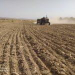 کشت گیاه دارویی خارشتر در شهرستان فراشبند