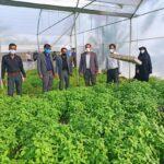 افتتاح طرح گلخانه تولید سبزی و صیفی در فراشبند