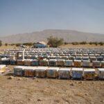 شروع مهاجرت زنبورستان ها به شهرستان فراشبند